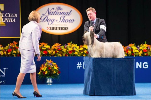 a judge approaches a dog at the National Dog Show