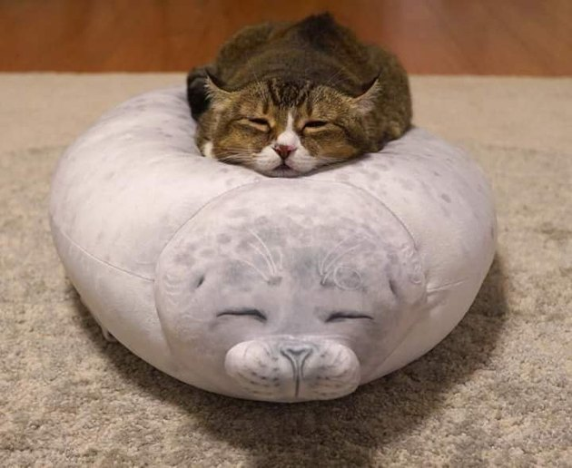 cat sleeping on a pillow shaped like a seal
