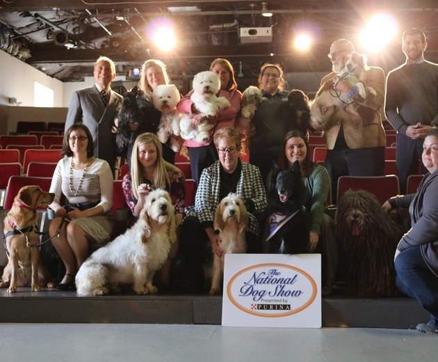 a group of National Dog Show entrants with their dogs