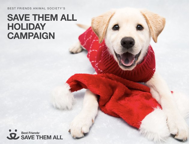 How You Can Help Pets This Giving Tuesday