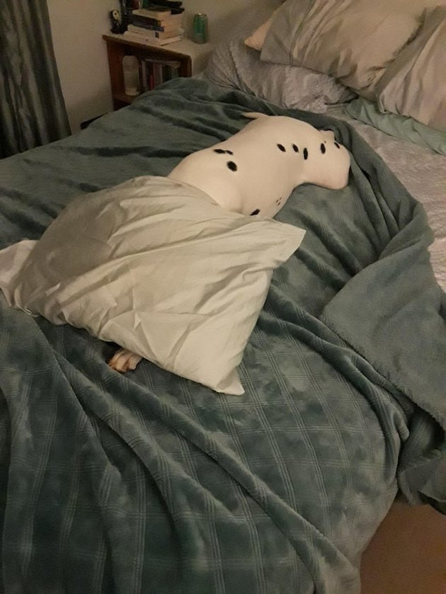 Spotted dog with its head under a pillow