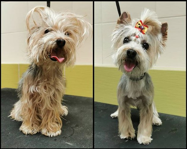 super shaggy dog groomed with a bow and ponytail