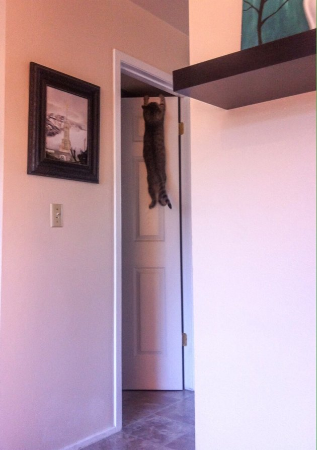 Cat hanging onto the frame of a door.