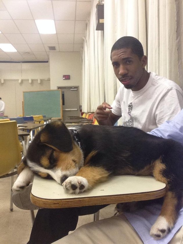 Puppy sleeping on a desk in a classroom