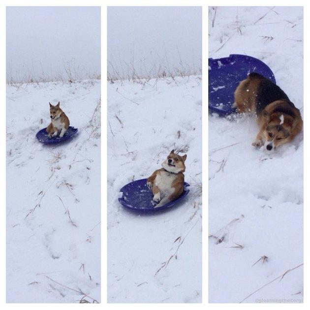 Dog falling off sled.