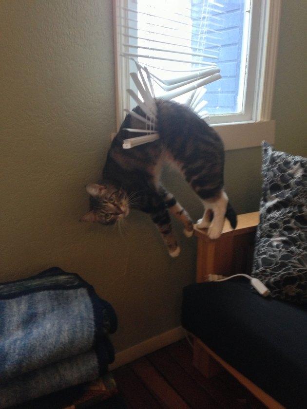Cat stuck in window blinds.