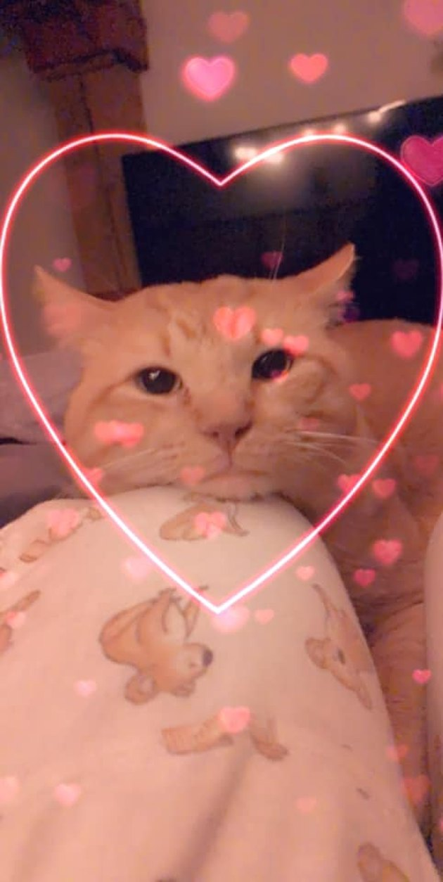 cat named Cheeto Bean Burrito with a heart around his head