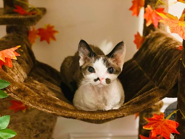 cat loafing in basket named Yzma