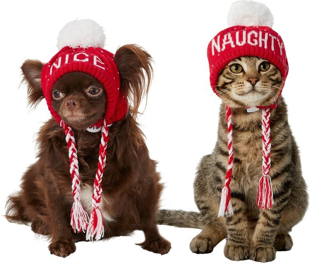 cat and dog wearing naughty and nice knit hats