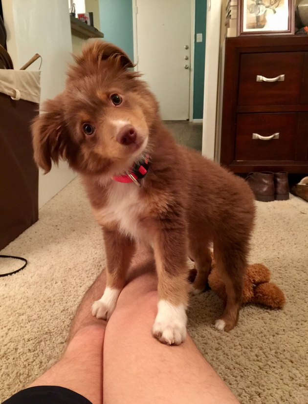 Puppy tilting its head to the side.
