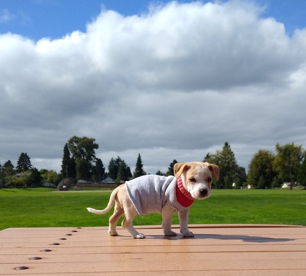 Puppy in a sweater on a picnic table