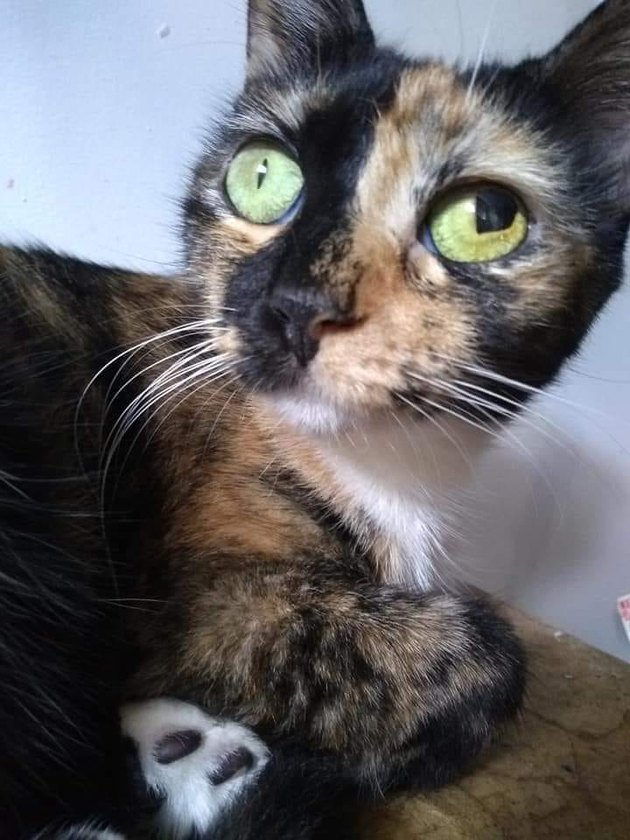 calico with ruptured pupil has fantastic cat name