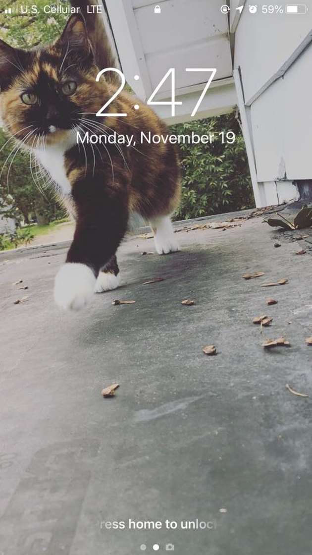 28 cat-themed locks screens for your phone