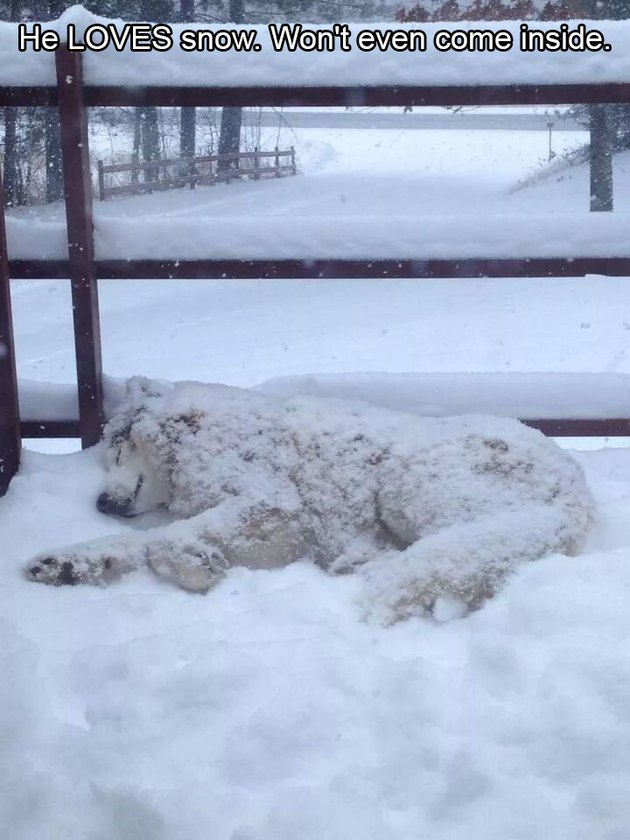 Dog napping in snow.