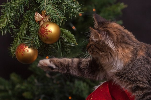Cat playing with Christmas ornament in Christmas tree