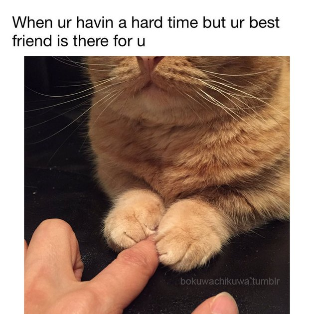 Cat holding person's finger with its paws.