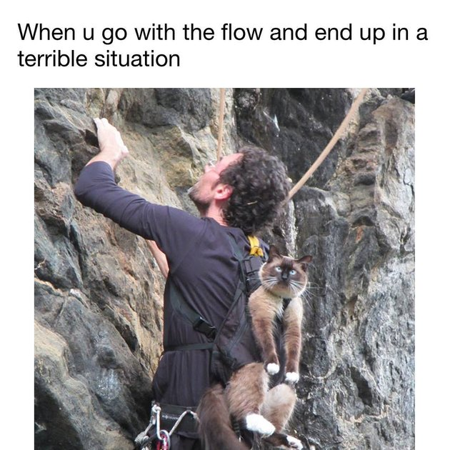 Cat strapped to back of man rock climbing. When u go with the flow and end up in a terrible situation