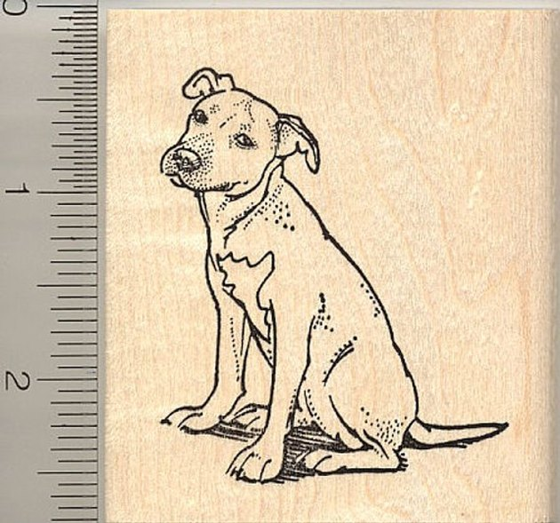 pit bull rubber stamp