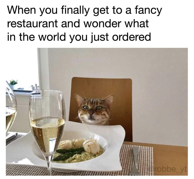 Cat sitting at table with fancy meal