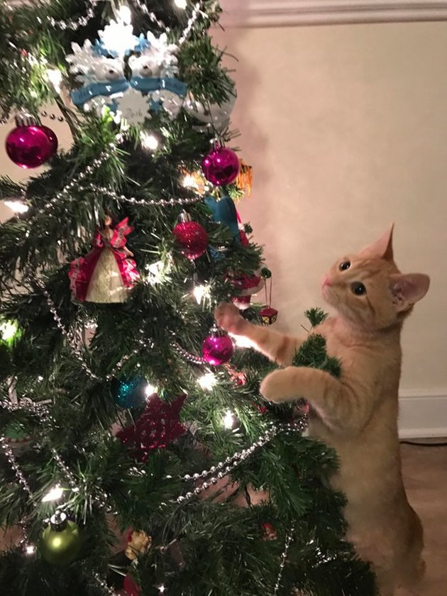 Kitten looking at Christmas tree