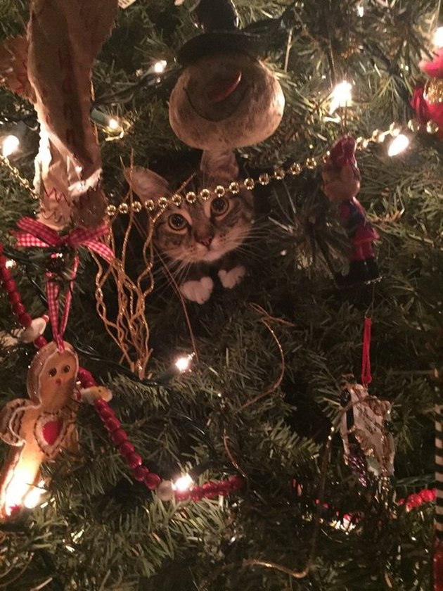 Cat hiding in Christmas tree