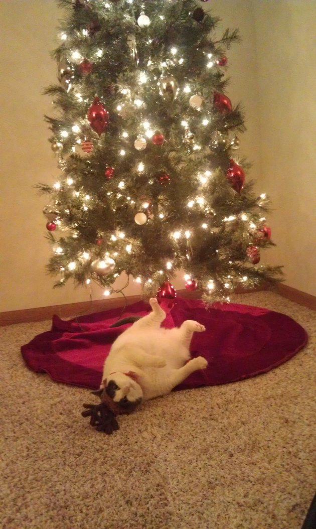 Cat wearing antlers lying under Christmas tree