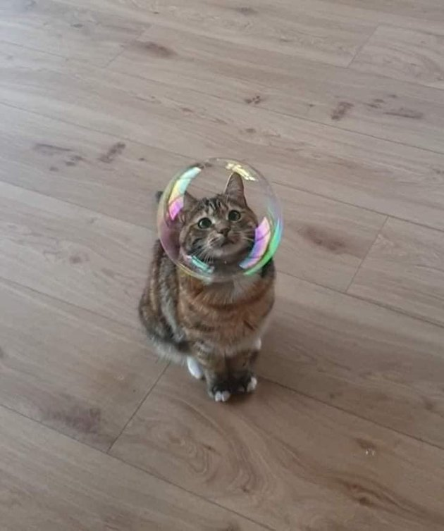 cat staring through bubble that looks like helmet