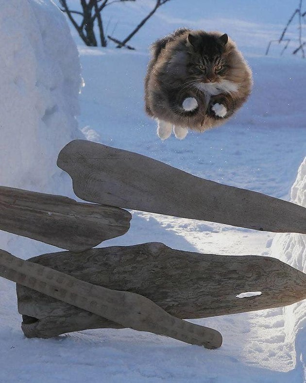 Huge cat leaping over pile of wood