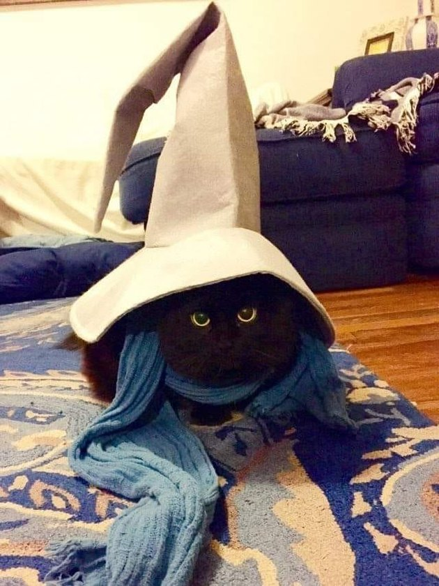 black cat in wizard hat