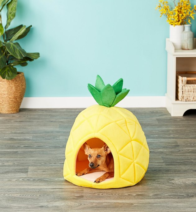 dog sleeps in pineapple shaped pet bed