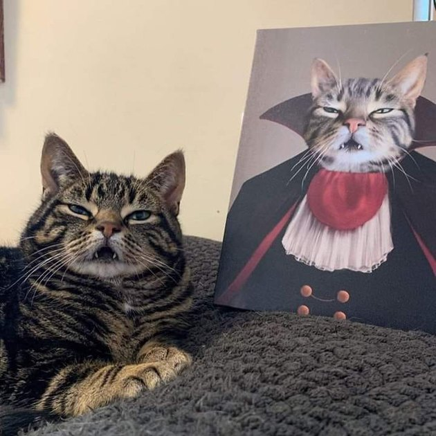 cat poses next to portrait of himself dressed in fancy clothing