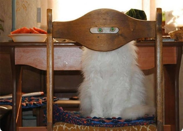 cat hides behind chair