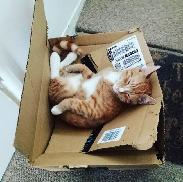 cat napping on top of broken box