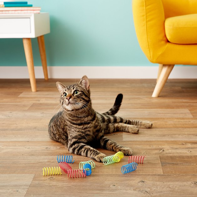 cat plays with colorful plastic springs