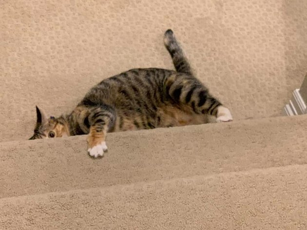 "cat ""hides"" at bottom of staircase"