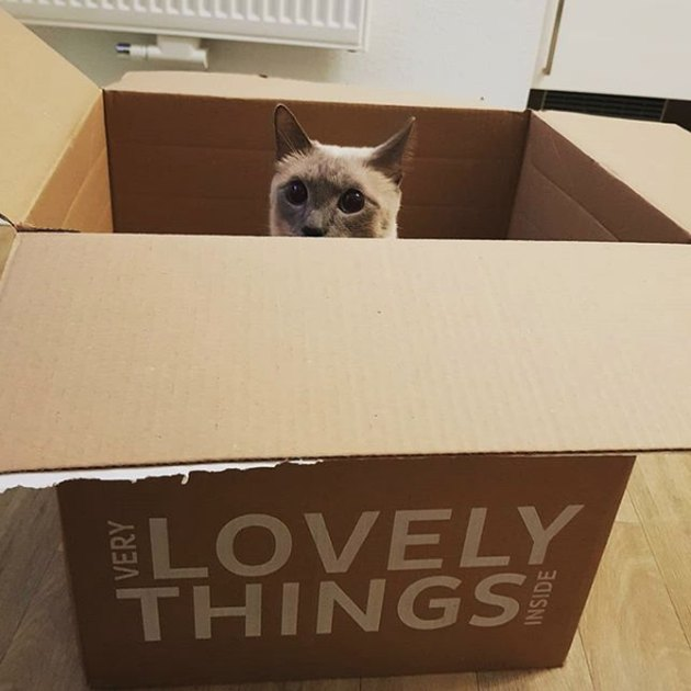 box reads very lovely things inside with a cat's head popping out