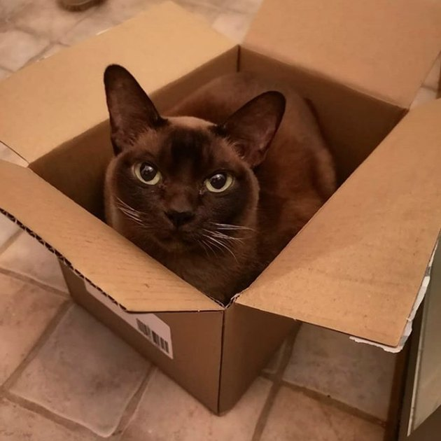 black cat inside box