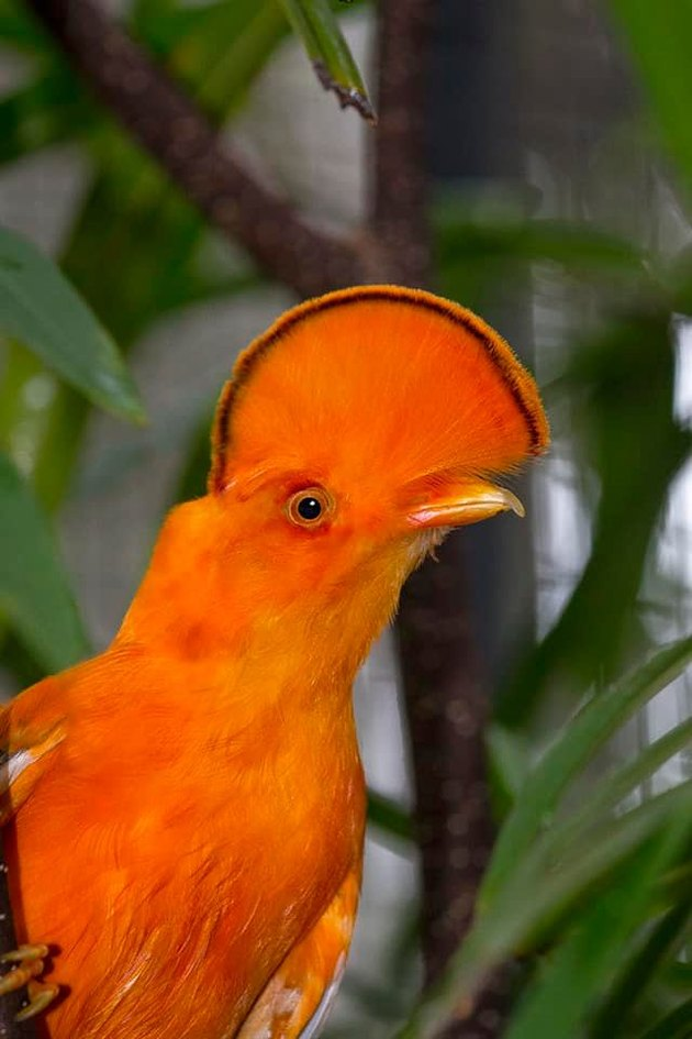 bird looks like orange slice