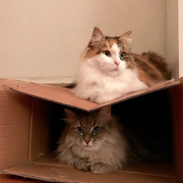 cat inside box with another cat on top
