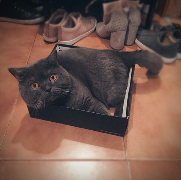 dark gray cat inside black box lid