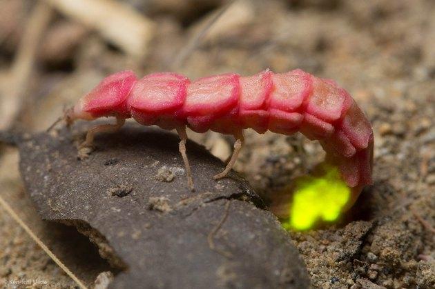 glowworm munches on something?