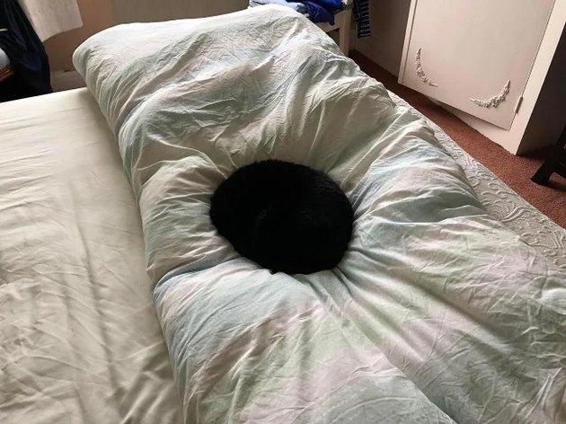 black cat on bed looks like interdimensional portal