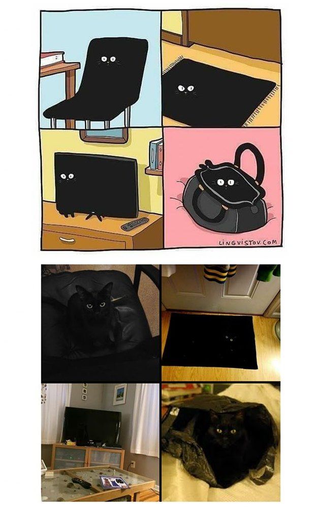 black cats blending into things