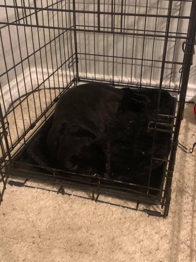 black cat blends into black rug