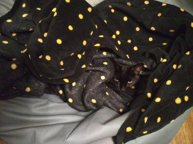 black cat blends in with black blanket