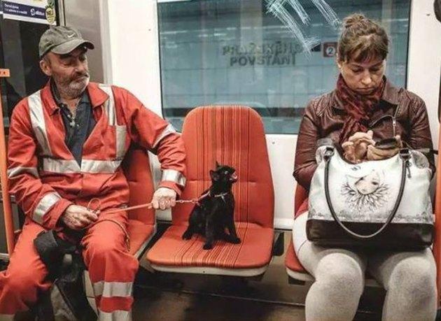 black cat yells at woman on train