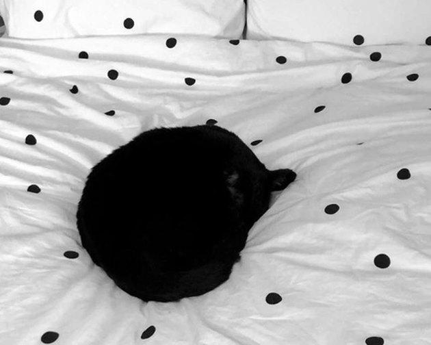 black cat looks like polka dot on blanket