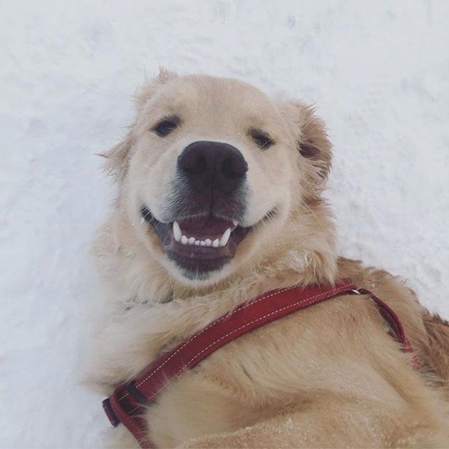 smiling dog in snow