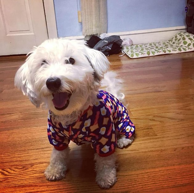 Dogs in pajamas