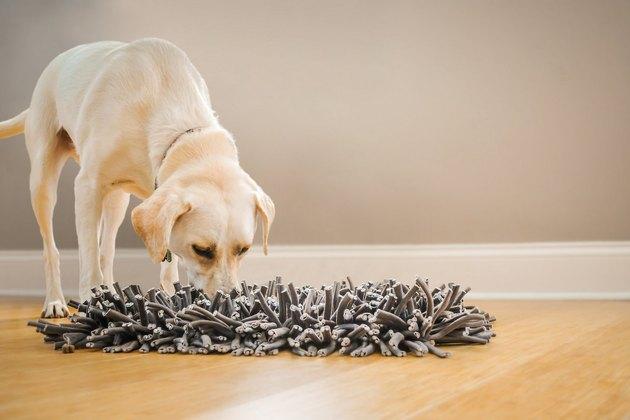 dog eats from snuggle feeding mat